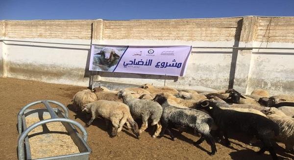 أضاحي جمعية النجاة الخيرية