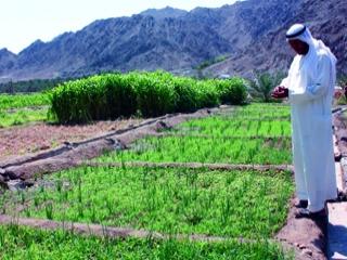 زكاة الزروع والمحاصيل